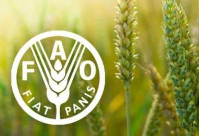 ФАО: в августе индекс цен на растительные масла достиг наивысшего за последние 11 месяцев показателя