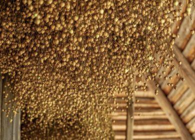 Эксперты прогнозируют рост мирового производства льна за счет стран СНГ