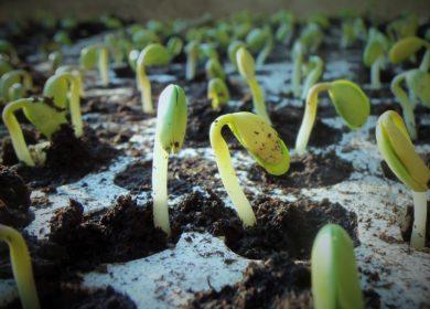 Институт сои в Приамурье поможет аграриям нарастить объемы производства
