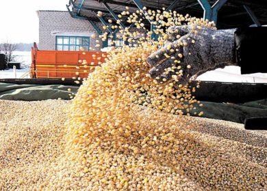В Bunge не зафиксировали проблем с отгрузкой сои из Бразилии