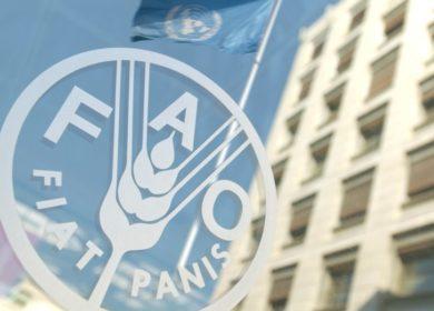 Высокие котировки на пальмовое масло стали причиной роста цен на растительные масла, –  ФАО