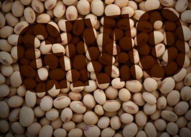 Переработчики: открытие импорта ГМО-сои губительно скажется на отечественной отрасли
