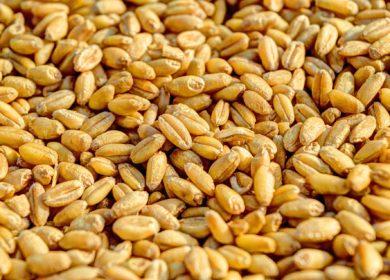 Bloomberg: Мир рискует оказаться отрезанным от российской пшеницы