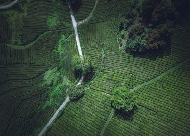 McKinsey: новые вызовы для сельскохозяйственного сектора