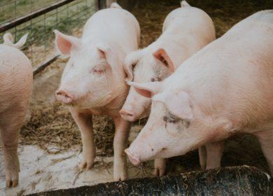 Китай приостановил ввоз продукции компании Tyson, где был выявлен коронавирус