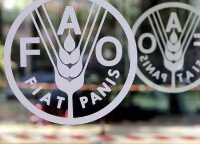 ФАО: индекс цен на растительные масла достиг минимального значения за последние 10 месяцев