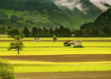 Франция ужесточает политику в отношении гибридов и семян рапса