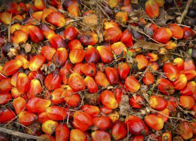 Рынок пальмового масла может «просесть» почти на миллион тонн, — эксперты