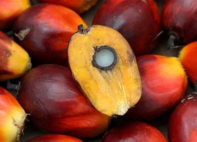 Цены на пальмовое масло могут пойти вверх при улучшении торговых отношений между Индией и Малайзией, — MPOB