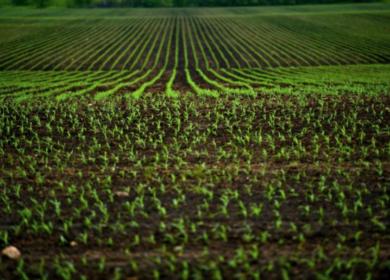 Минсельхоз внес в правительство законопроект о семеноводстве