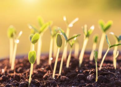 Лисовский: Проект о семеноводстве почти готов к внесению в Госдуму