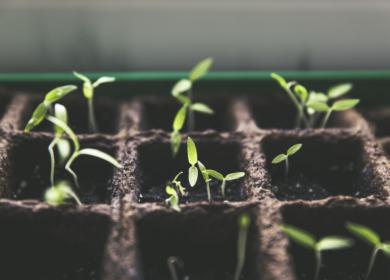 ГМ-семена, рынок СЗР и новые тренды