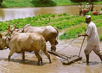 Индийский рынок шрота ожидает восстановления после тотального майского падения