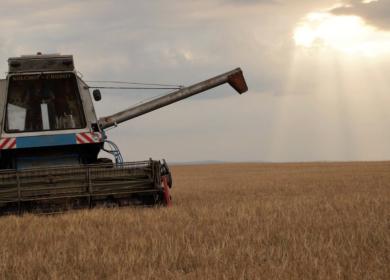 Темпы жатвы в РФ существенно ниже прошлогодних — эксперты