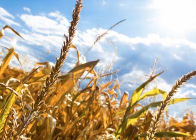 Российская компания «Содружество» отправила в Бразилию 70 тыс. тонн зерна