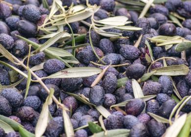 Производство оливкового масла последовательно восстанавливается, — Еврокомиссия