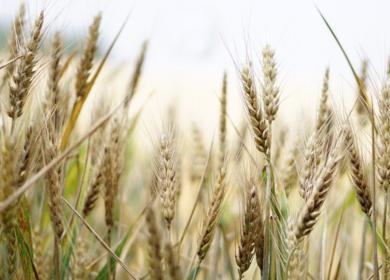 В России ожидают рекордно низкие показатели по экспорту зерновых впервые с 2017 года