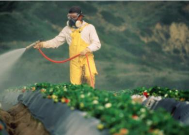 СовФед одобрил новый скорректировал порядок применения пестицидов и агрохимикатов в сельском хозяйстве