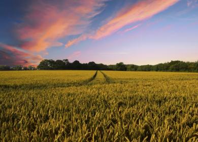 Ход уборочных сельхозработ по данным на 28 июля: намолочено 51 млн тонн зерна