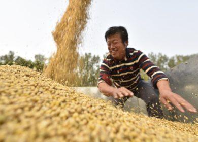 Спрос на растительные масла и сою укрепляется на китайском рынке, —  USDA