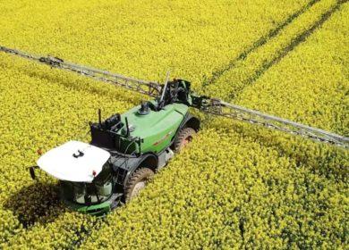 В Украине не ожидают благоприятных условий для сева рапса в текущем сезоне