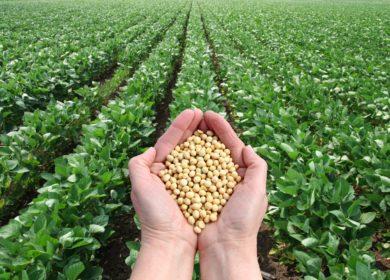 Бразилия добьется рекордных показателей по урожаю сои в этом году, — эксперты