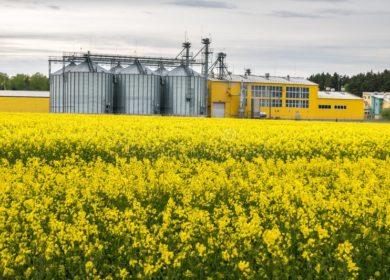 Аналитики службы FarmLink дали положительный прогноз на производство канолы в Канаде