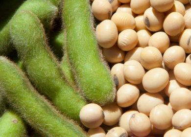 Экспорт соевых бобов из России может достичь абсолютного максимума до конца сезона