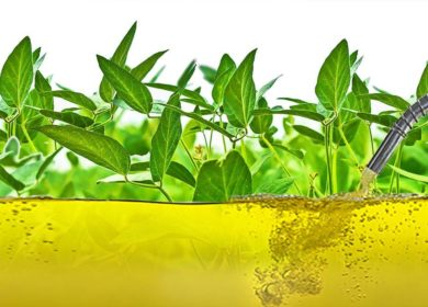 Производство биотоплива в Аргентине может достичь самой низкой отметки за 10 лет