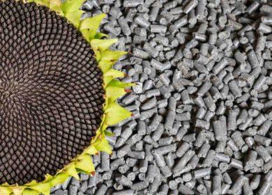 Казахстан вдвое увеличил экспорт подсолнечного шрота в текущем сезоне