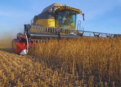 Аграрии Краснодарского края рассчитывают собрать рекордный урожай сои