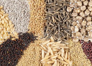 За месяц Россия отгрузила 368 тыс. тонн масличных культур в 105 стран-импортеров
