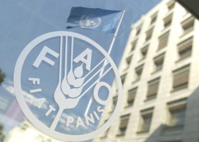 Аналитики ФАО прогнозируют стабильные мировые цены на масличные культуры