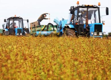 В Башкирии приступили к уборке масличных культур
