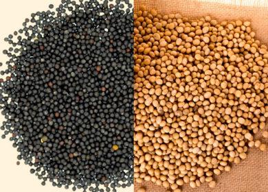 Лаборатории в Москве и Барнауле не обнаружили ГМО-компоненты в омском рапсе и сои