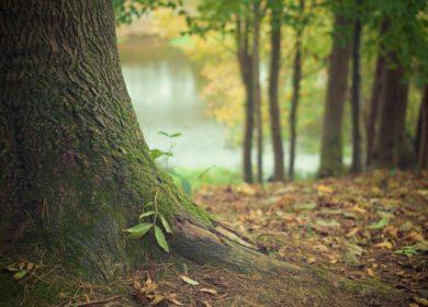 Nestle, Danone, Unilever и другие компании объединились против вырубки лесов