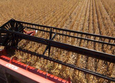 В этом сезоне в Приморском крае рассчитывают собрать 300 тыс. тонн сои
