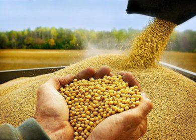 «Черкизово» открывает шрот. В переработку сои в Липецкой области компания может направить 11,3 млрд рублей