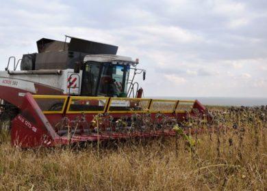 Аграрии Тамбовской области приступили к уборке подсолнечника