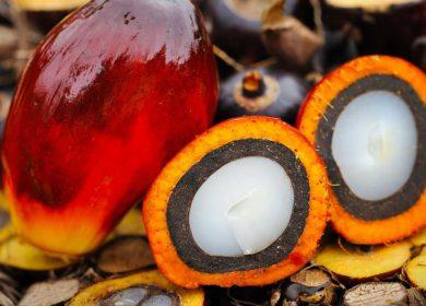 В начале сентября Малайзия увеличила экспорт пальмового масла