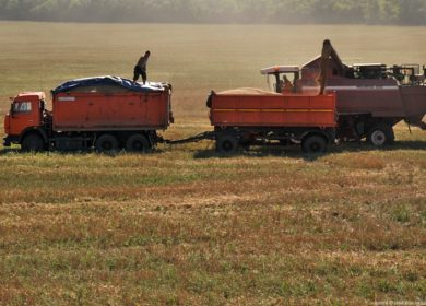 Российские аграрии наращивают поставки и производство соевого шрота и жмыха