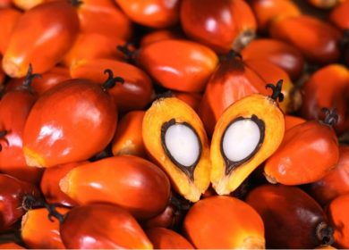 Малайзия и Индонезия суммарно увеличили экспорт пальмового масла за июнь-июль