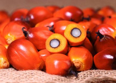 Импорт пальмового масла в Индию в августе сократился