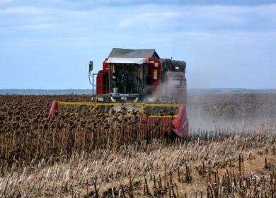 Урожай рапса и подсолнечника в Украине сократится, — эксперты