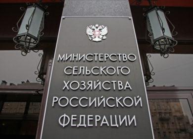 В Минсельхозе РФ оценили перспективы экспорта масличных
