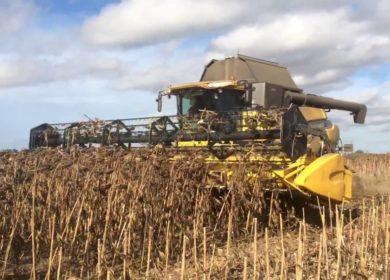 Задержка уборки подсолнечника не привела к сокращению производства подсолнечного масла на Украине