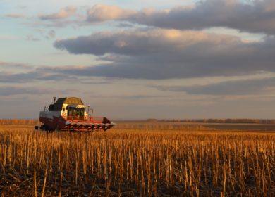 В Чувашии начали выплачивать субсидии на стимулирование увеличения производства масличных культур