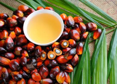 С января по август 2020 года Украина импортировала 128 тыс. тонн пальмового масла