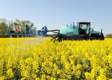Растущий спрос на рапс может привести к ужесточению контроля пестицидов
