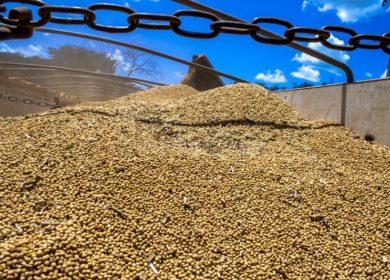 Аргентина в этом году сократила экспорт сои и продуктов переработки